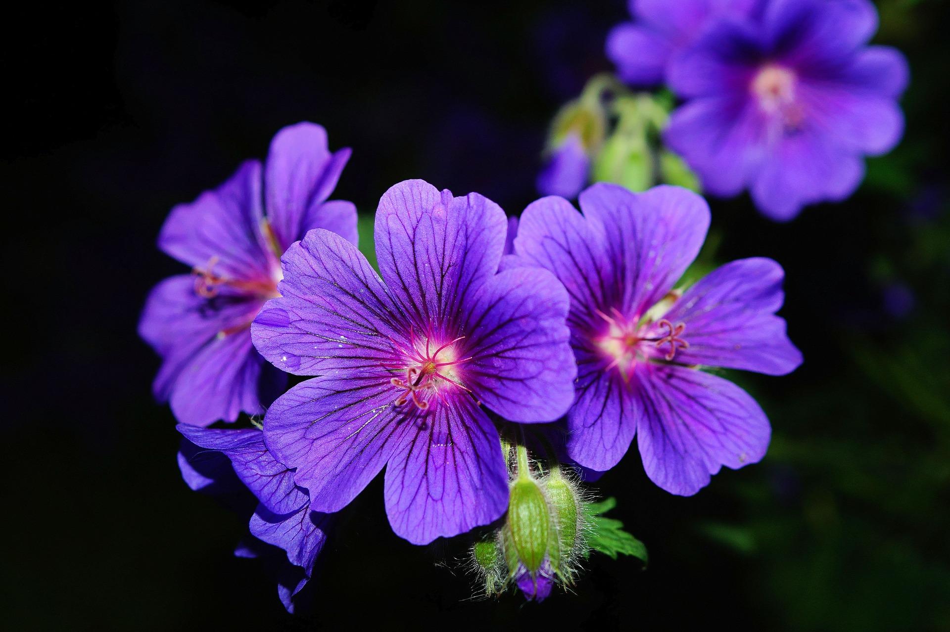 flower-356919_1920