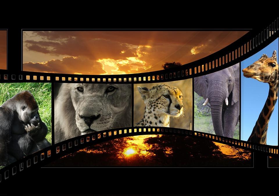 動物の映画